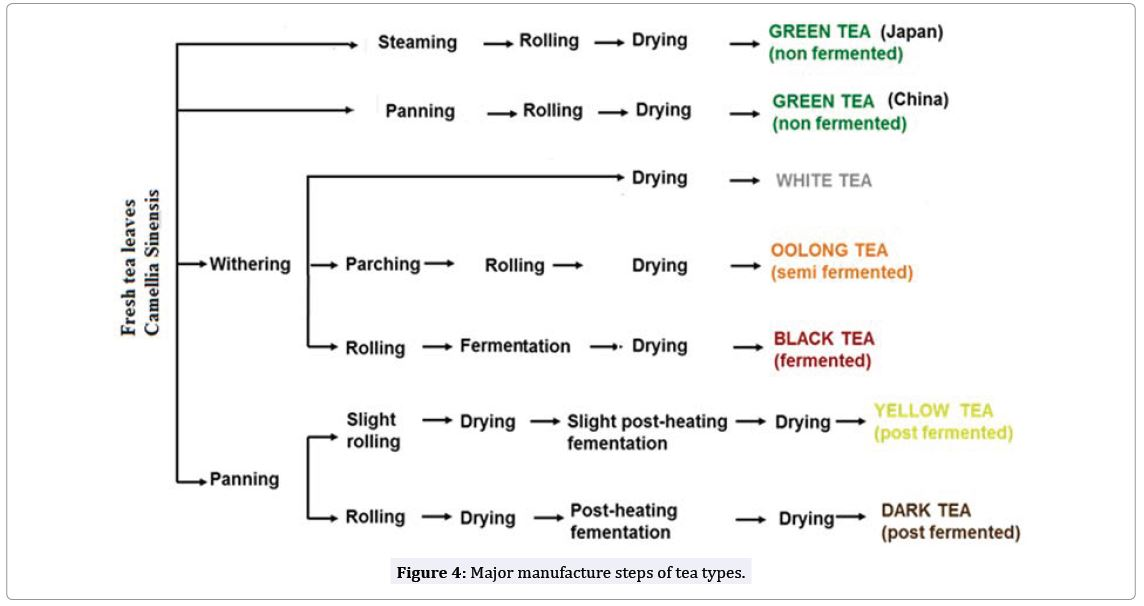 Morphology Manufacturing Types Composition And Medicinal